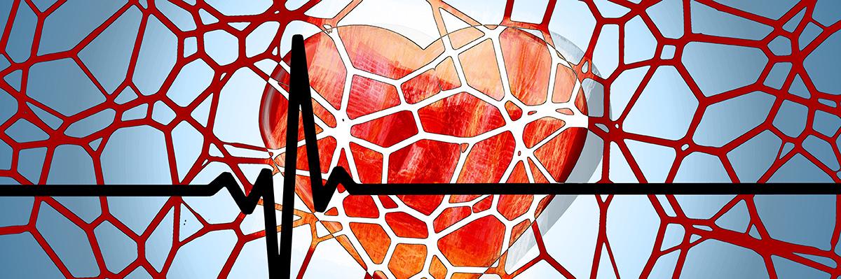 slika-srce-krvni-sudovi